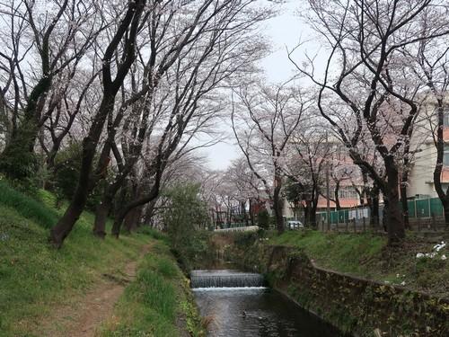 桜ヶ丘‗こよみふせん