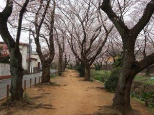 千本桜1‗こよみふせん